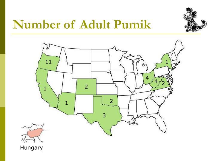 Number of Adult Pumik