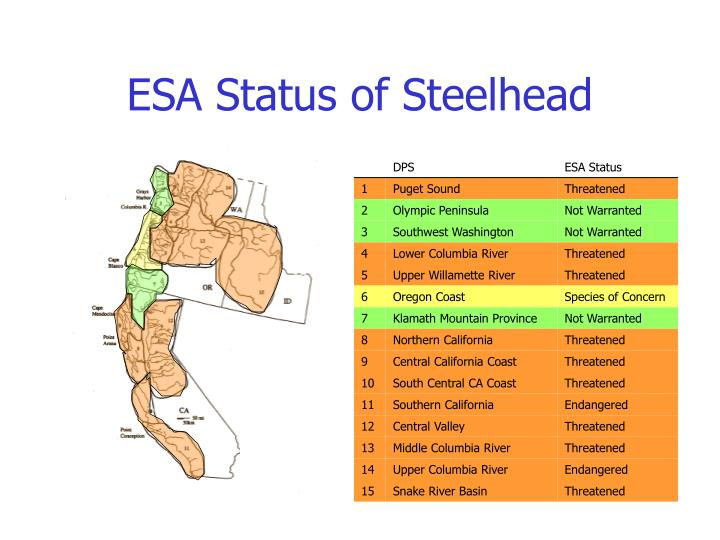 ESA Status of Steelhead