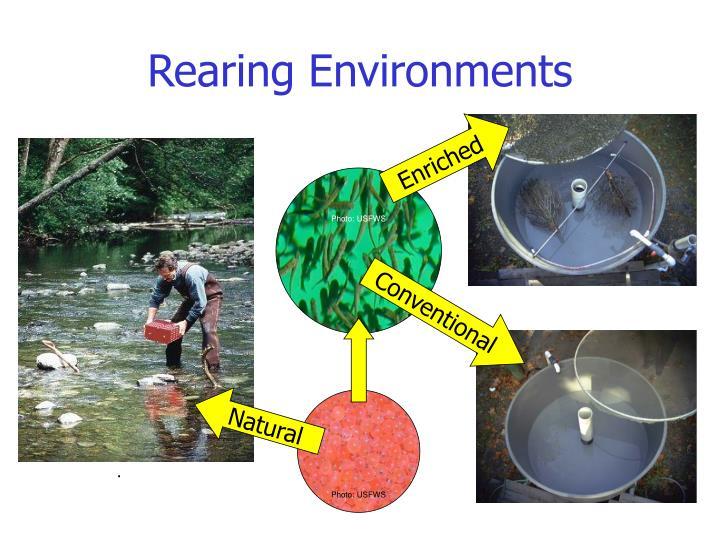 Rearing Environments