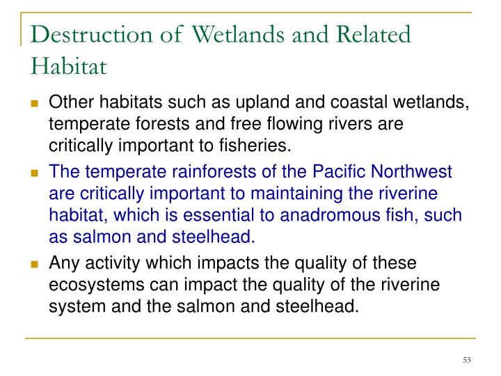 Destruction of Wetlands and Related Habitat