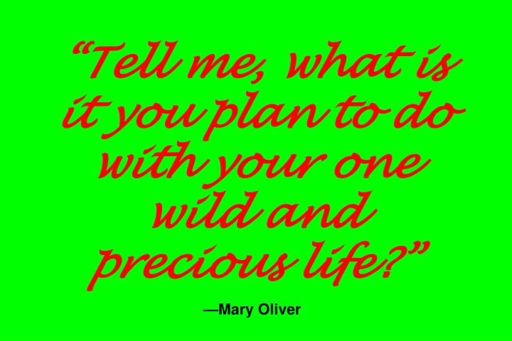 """Tell me, what is it you plan to do with your one wild and precious life?"""