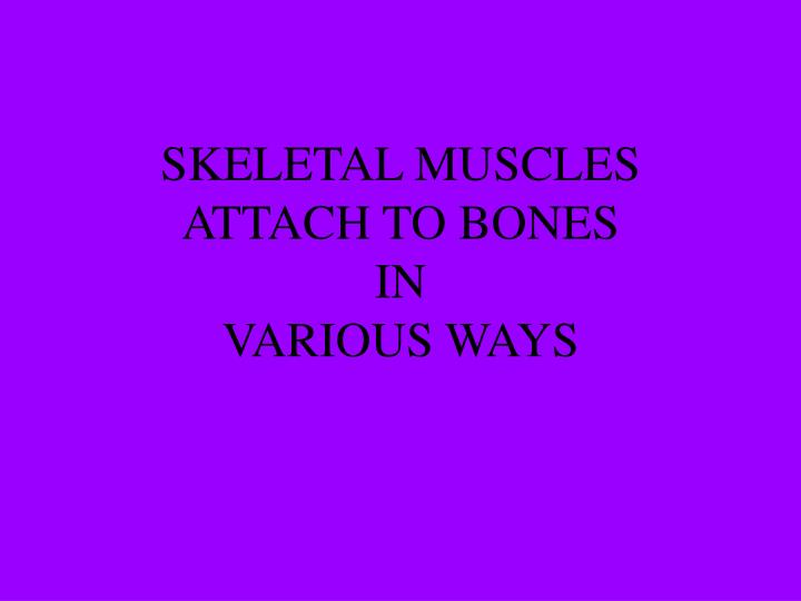SKELETAL MUSCLES ATTACH TO BONES