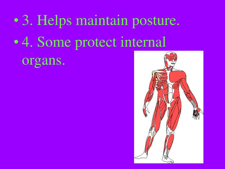 3. Helps maintain posture.