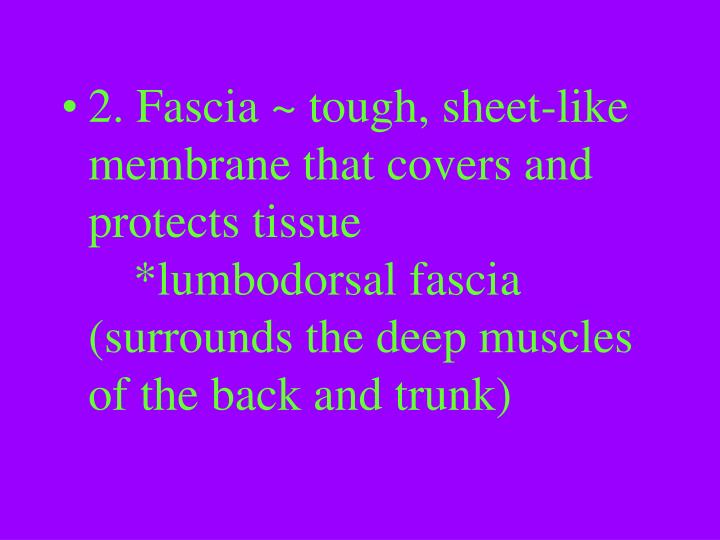 2. Fascia ~ tough, sheet-like membrane that covers and protects tissue*lumbodorsal fascia (surrounds the deep muscles of the back and trunk)