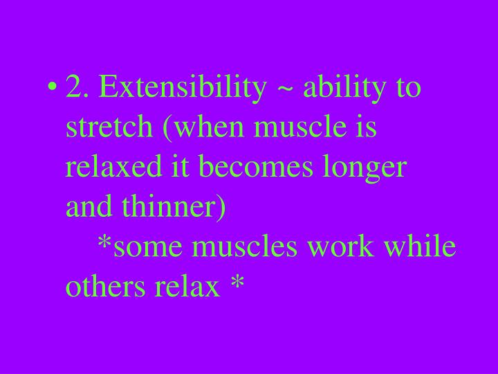 2. Extensibility ~ ability to stretch (when muscle is relaxed it becomes longer and thinner) *some muscles work while others relax *