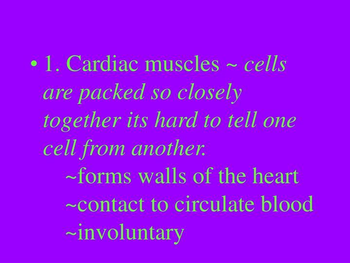 1. Cardiac muscles ~