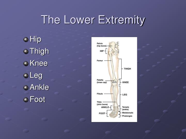 The Lower Extremity