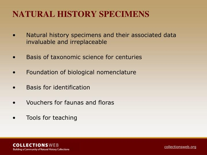 NATURAL HISTORY SPECIMENS