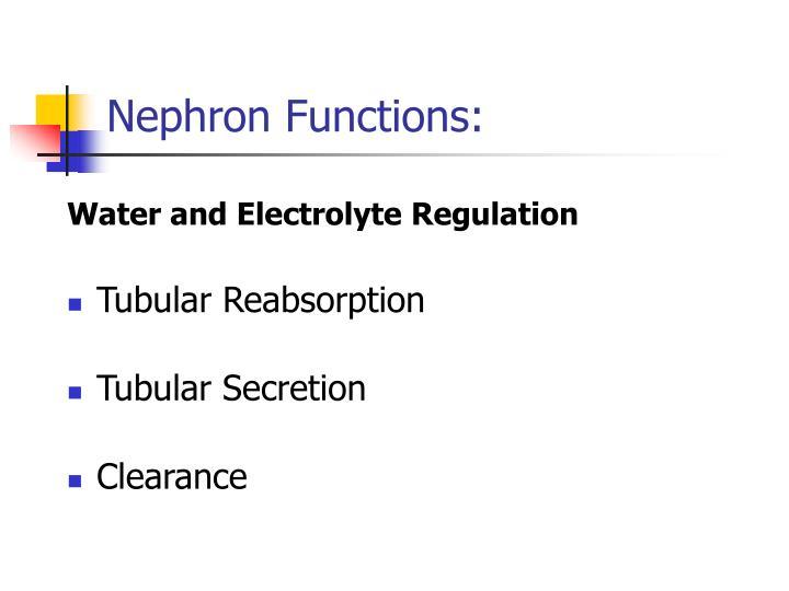 Nephron Functions: