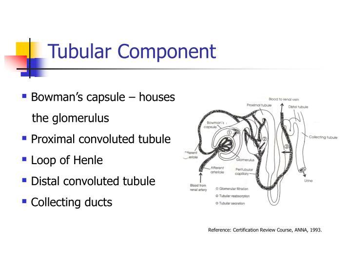 Tubular Component