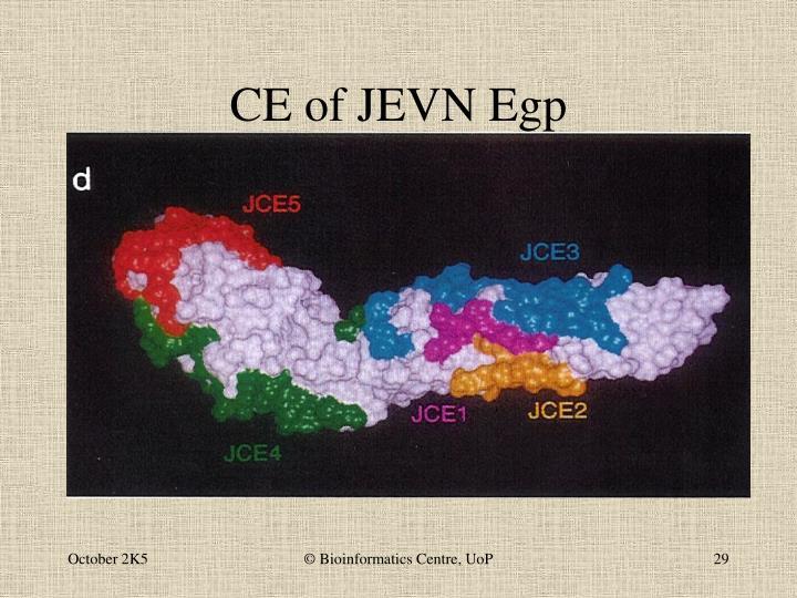 CE of JEVN Egp