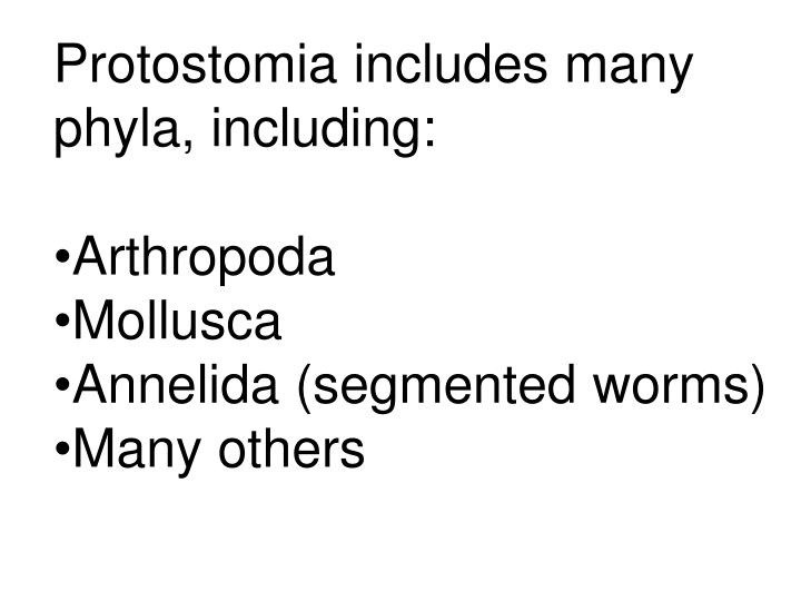 Protostomia includes many phyla, including: