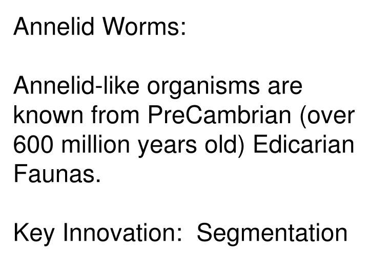 Annelid Worms: