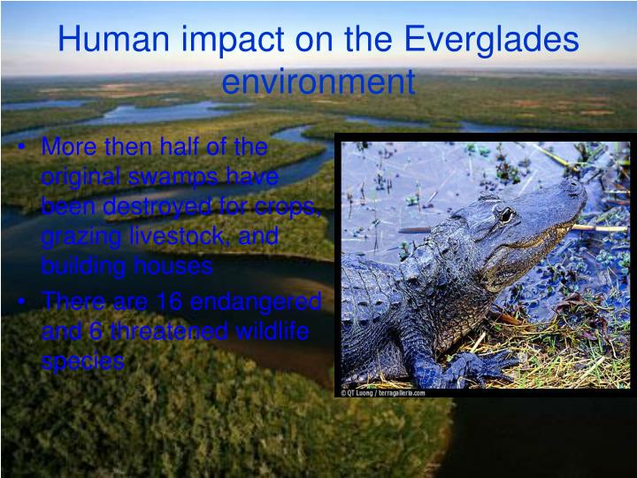 Human impact on the Everglades environment