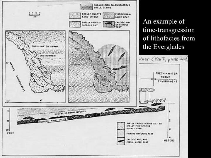 An example of time-transgression of lithofacies from the Everglades