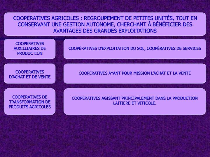 COOPERATIVES AGRICOLES : REGROUPEMENT DE PETITES UNITÉS, TOUT EN CONSERVANT UNE GESTION AUTONOME, CHERCHANT À BÉNÉFICIER DES AVANTAGES DES GRANDES EXPLOITATIONS