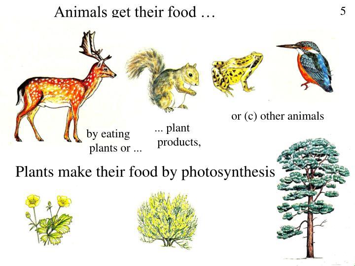 Animals get their food …