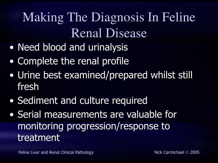 Making The Diagnosis In Feline Renal Disease