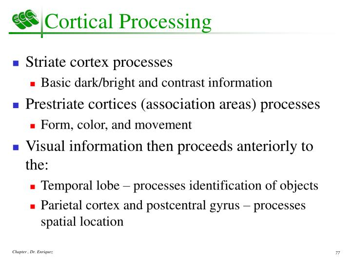 Cortical Processing