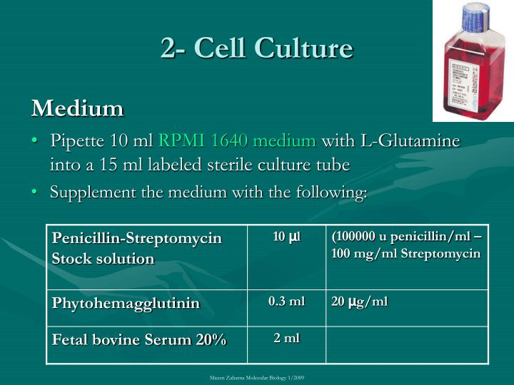 2- Cell Culture