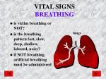 vital signs breathing