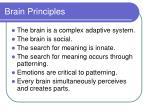 brain principles