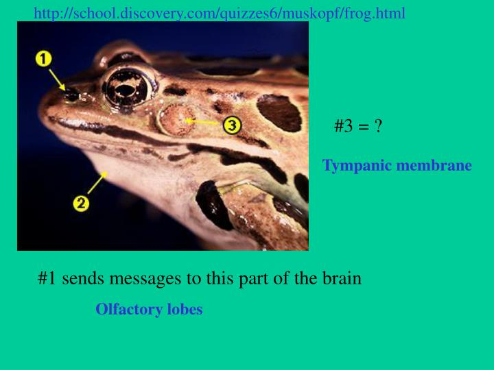 Http://school.discovery.com/quizzes6/muskopf/frog.html