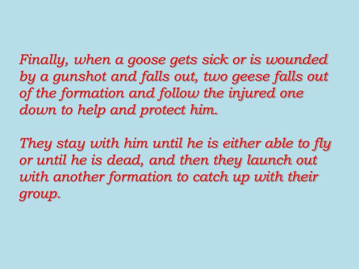 Finally, when a goose gets sick or is wounded by a gunshot and falls out, two geese falls out of the formation and follow the injured one down to help and protect him.