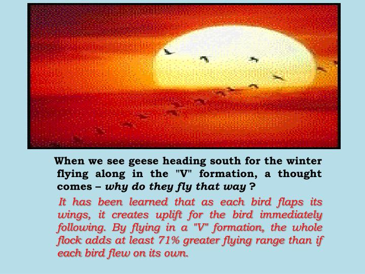 """When we see geese heading south for the winter flying along in the """"V"""" formation, a thought comes –"""