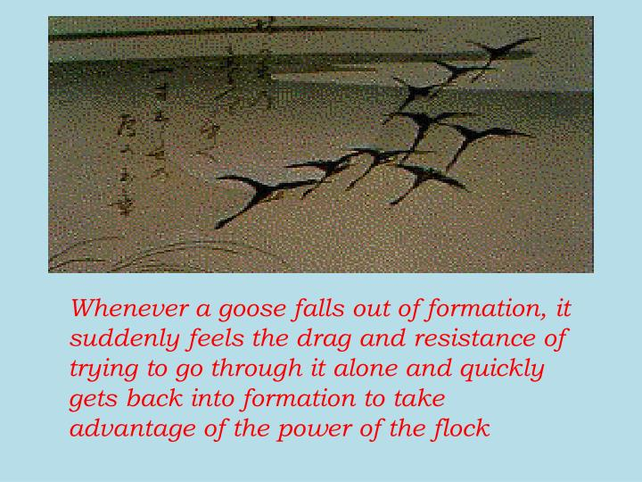 Whenever a goose falls out of formation, it suddenly feels the drag and resistance of trying to go through it alone and quickly gets back into formation to take advantage of the power of the flock
