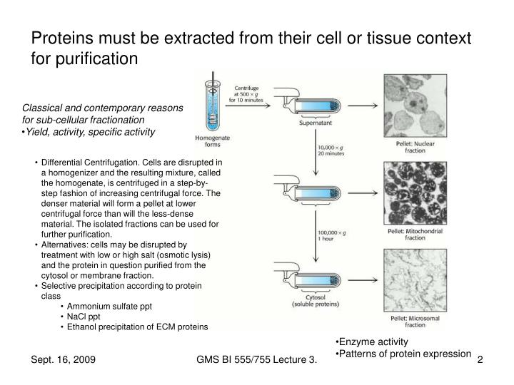Proteins must be extracted from their cell or tissue context for purification
