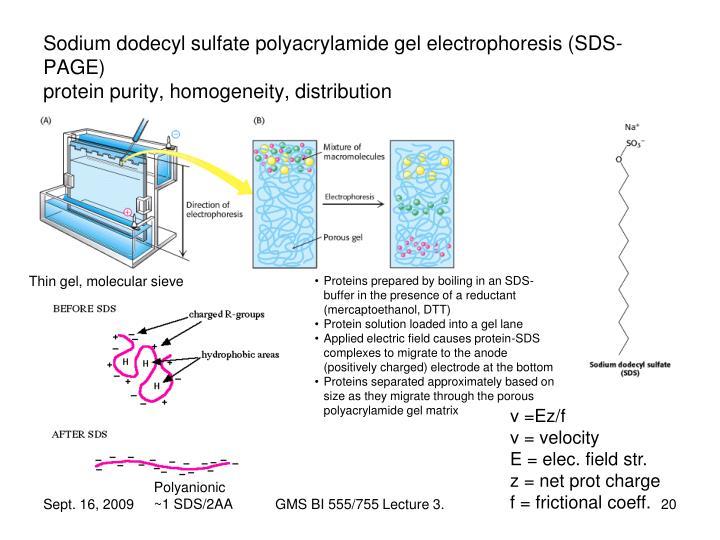 Sodium dodecyl sulfate polyacrylamide gel electrophoresis (SDS-PAGE)