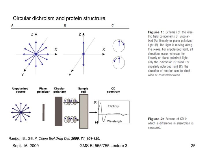 Circular dichroism and protein structrure