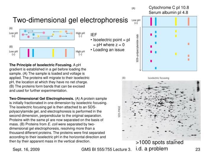 Cytochrome C pI 10.8