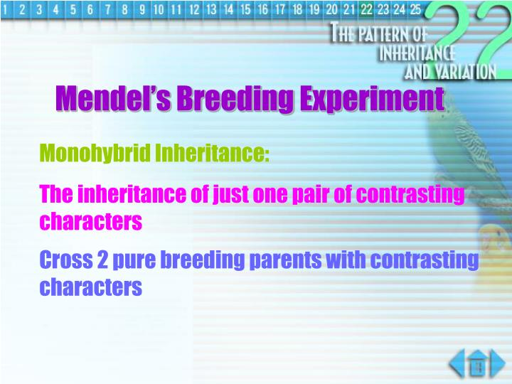 Mendel's Breeding Experiment