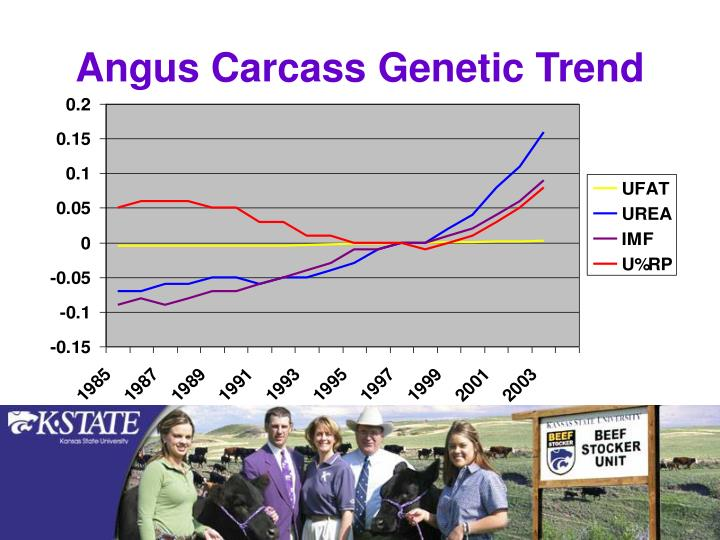 Angus Carcass Genetic Trend