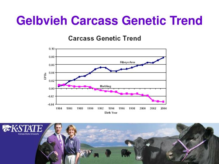 Gelbvieh Carcass Genetic Trend