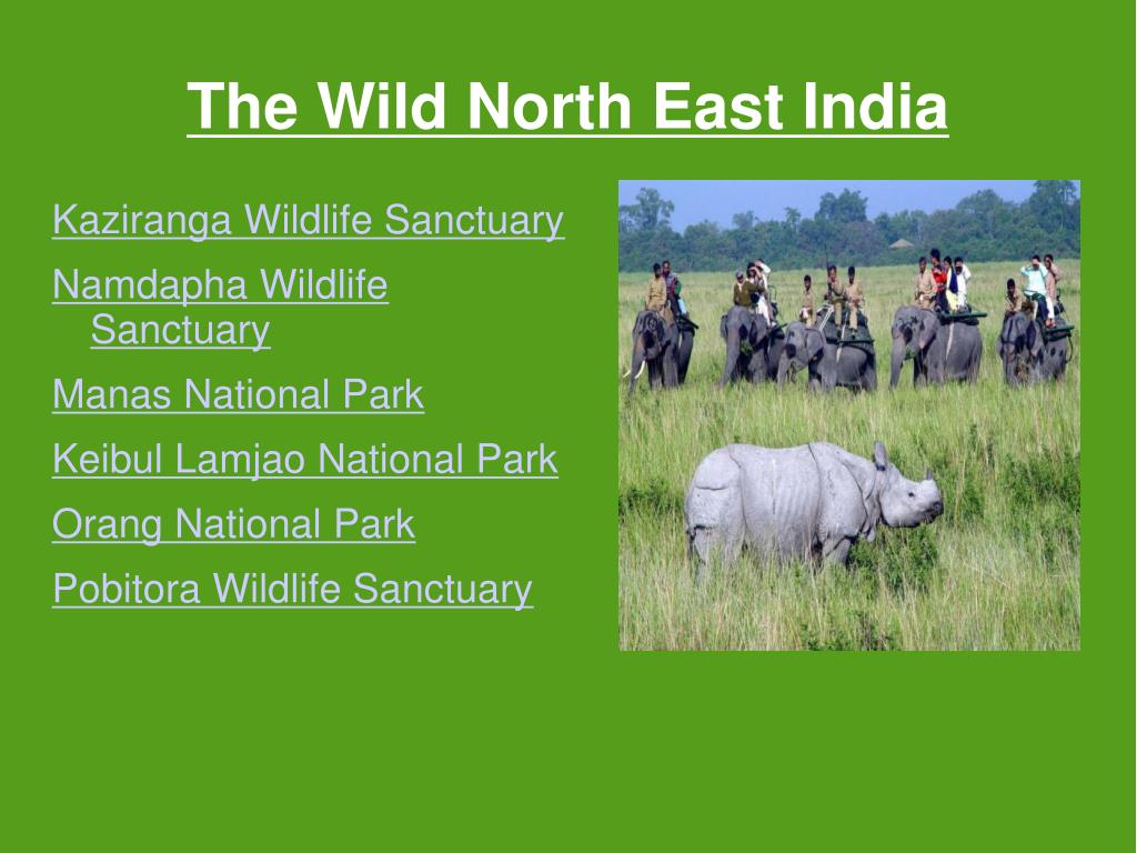 The Wild North East India