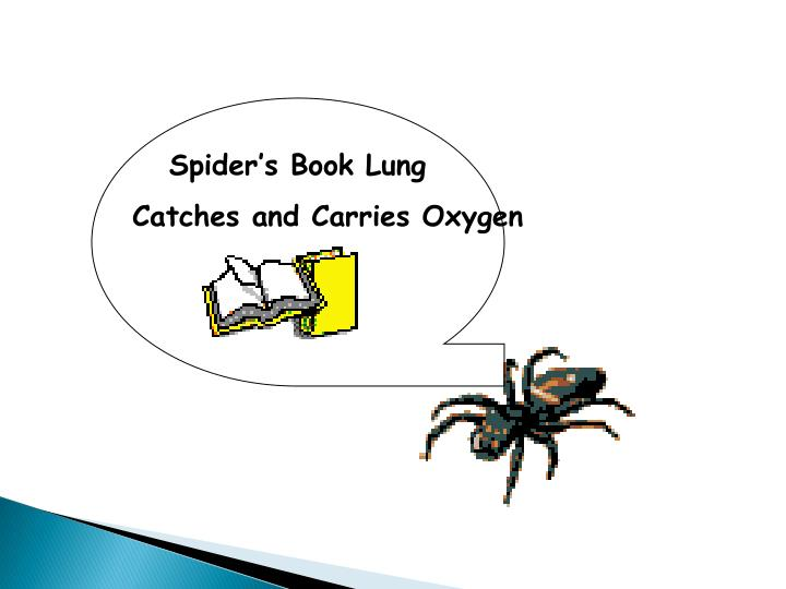 Spider's Book Lung