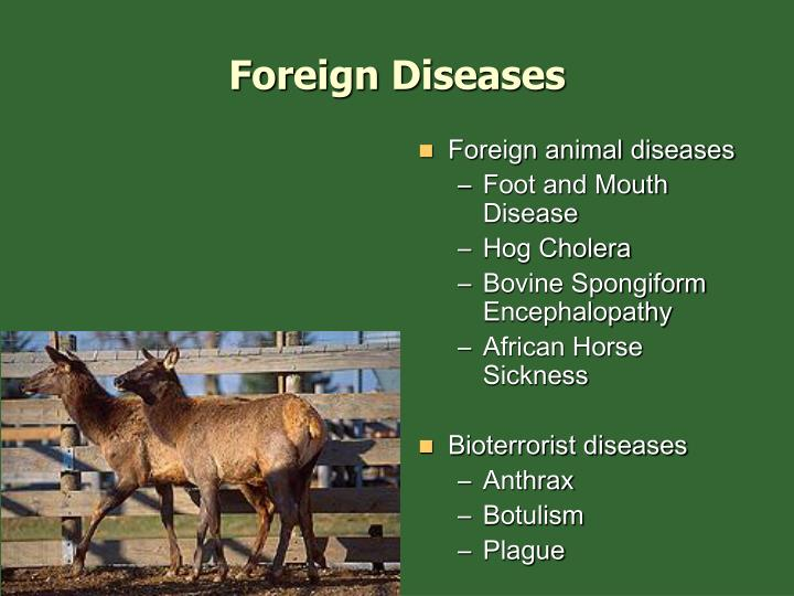 Foreign Diseases