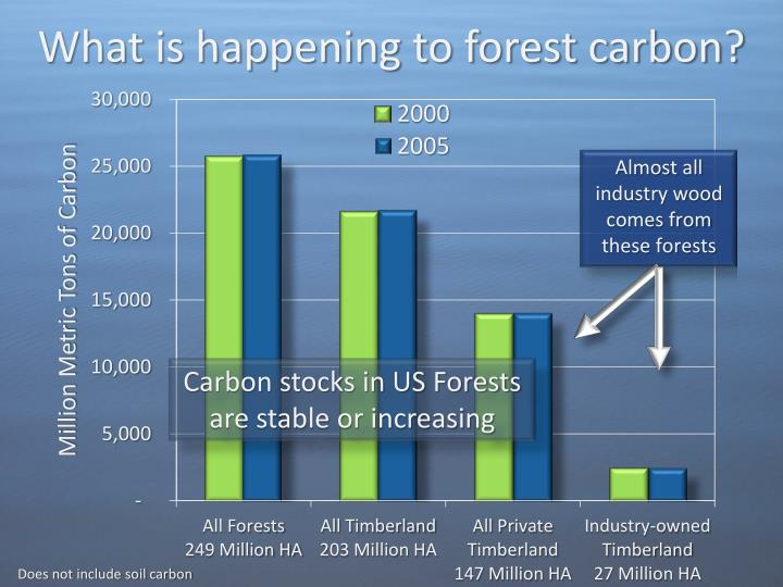 What is happening to forest carbon?