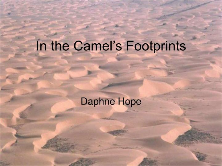 in the camel s footprints