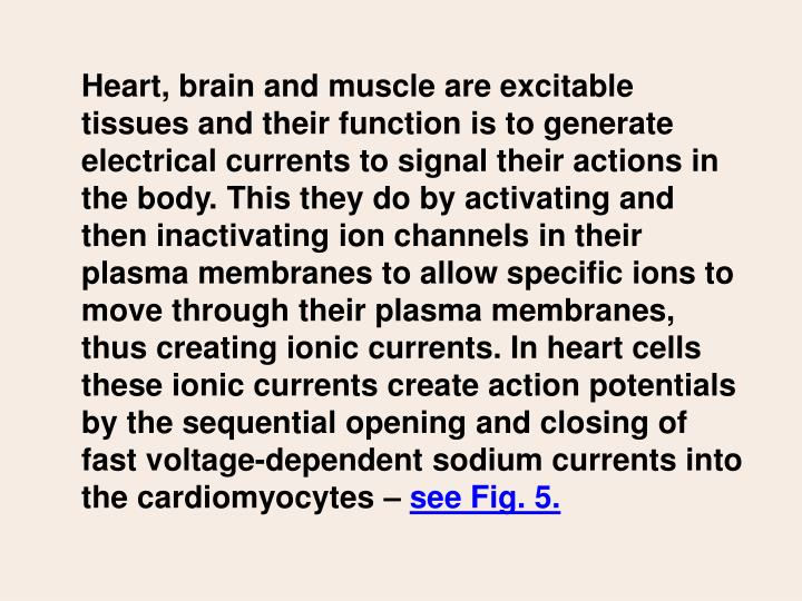 Heart, brain and muscle are excitable tissues and their function is to generate electrical currents to signal their actions in the body. This they do by activating and then inactivating ion channels in their plasma membranes to allow specific ions to move through their plasma membranes, thus creating ionic currents. In heart cells these ionic currents create action potentials by the sequential opening and closing of fast voltage-dependent sodium currents into the cardiomyocytes –