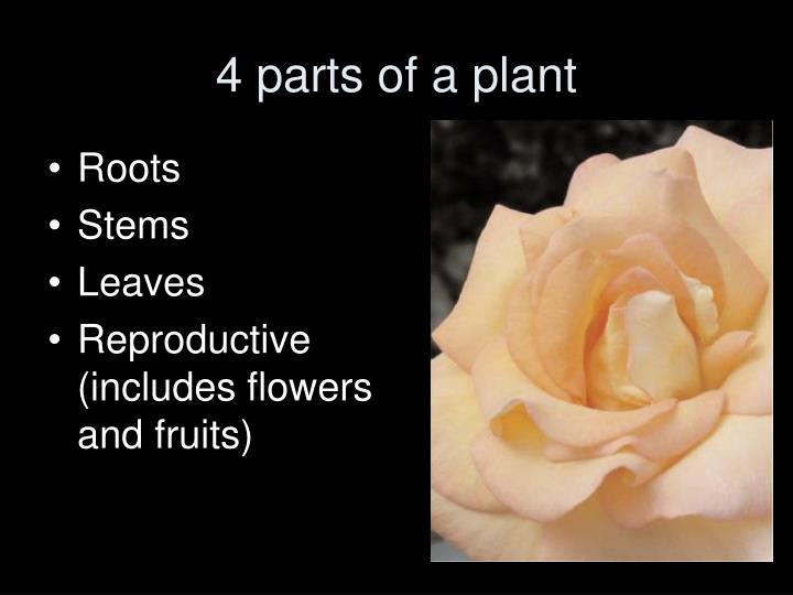 4 parts of a plant