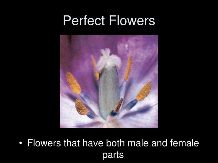 Perfect Flowers
