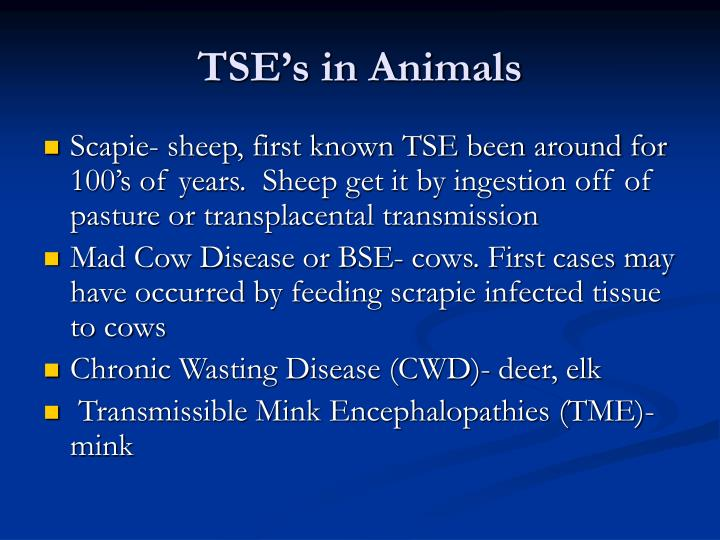TSE's in Animals