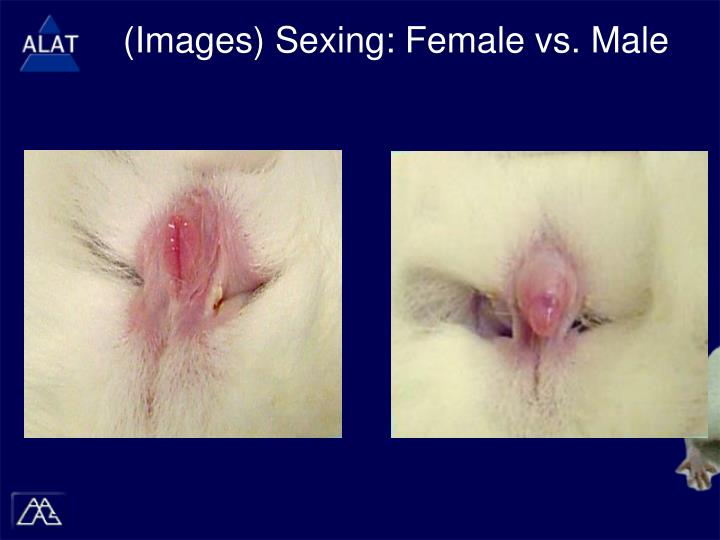 (Images) Sexing: Female vs. Male