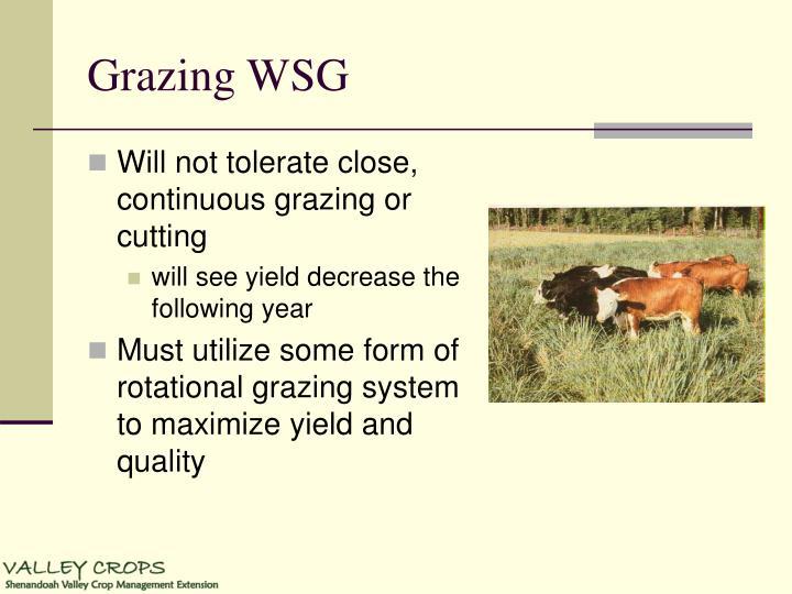 Grazing WSG