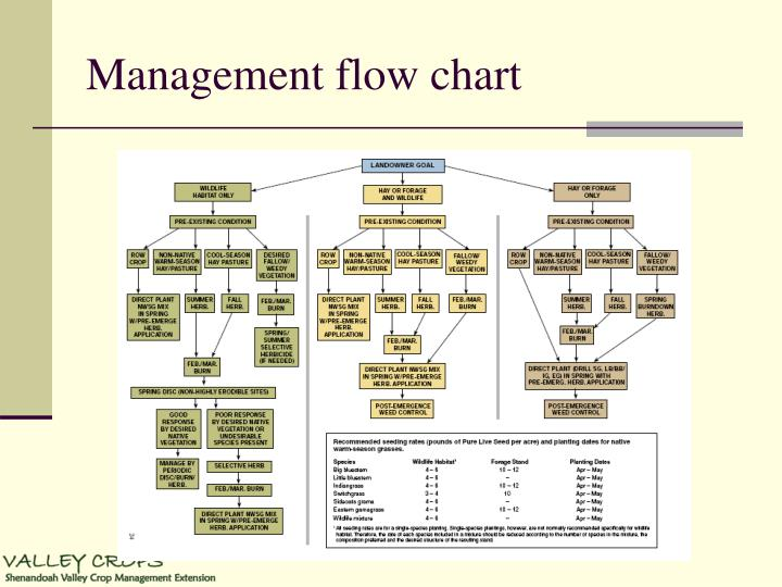 Management flow chart