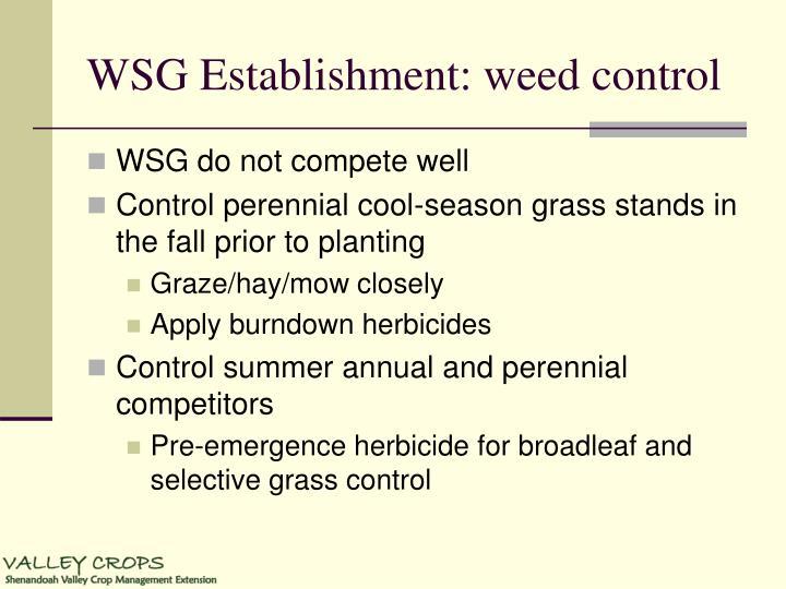 WSG Establishment: weed control
